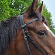 Dabo's Design | Biothane voor Paard & Hond | Horren 1